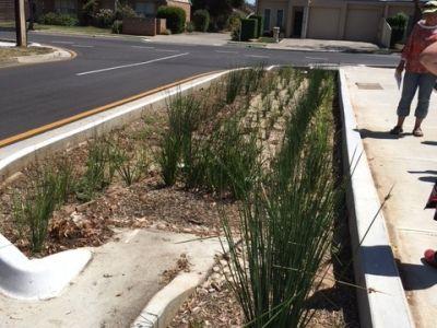 Stormwater Management / Raingardens