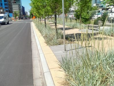 Natural grasses on the edge of the sidewalk by the road, with trees.