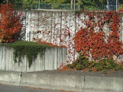Concrete with climbing plants