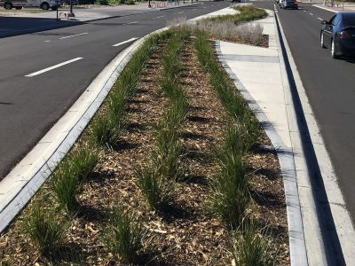 Natural grasses (swale)