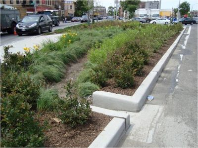 Plantings in a boulevard (to help drain stormwater)