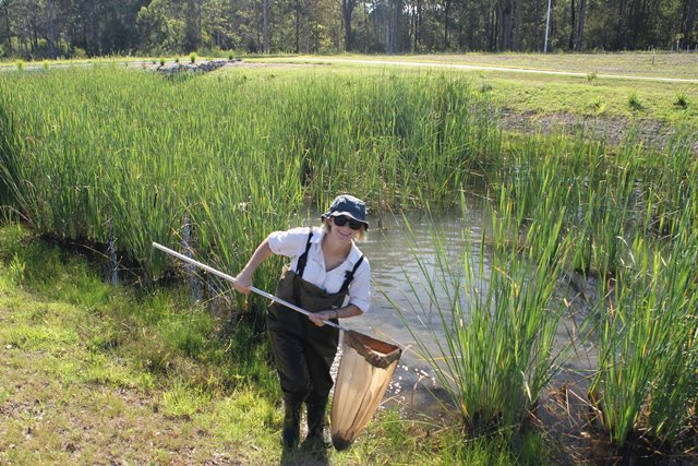 Waterbug Sampling, Image by City of Melbourne​
