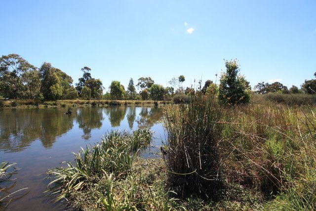Royal Park Wetlands, Image by City of Melbourne