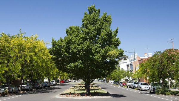 Parkville Urban Forest