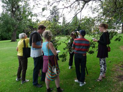 Citizen Foresters inspect leaves on an elm tree