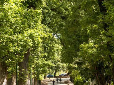 People walk between the tall elm trees in Fitzroy Gardens