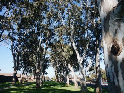 Olive Grove Reserve