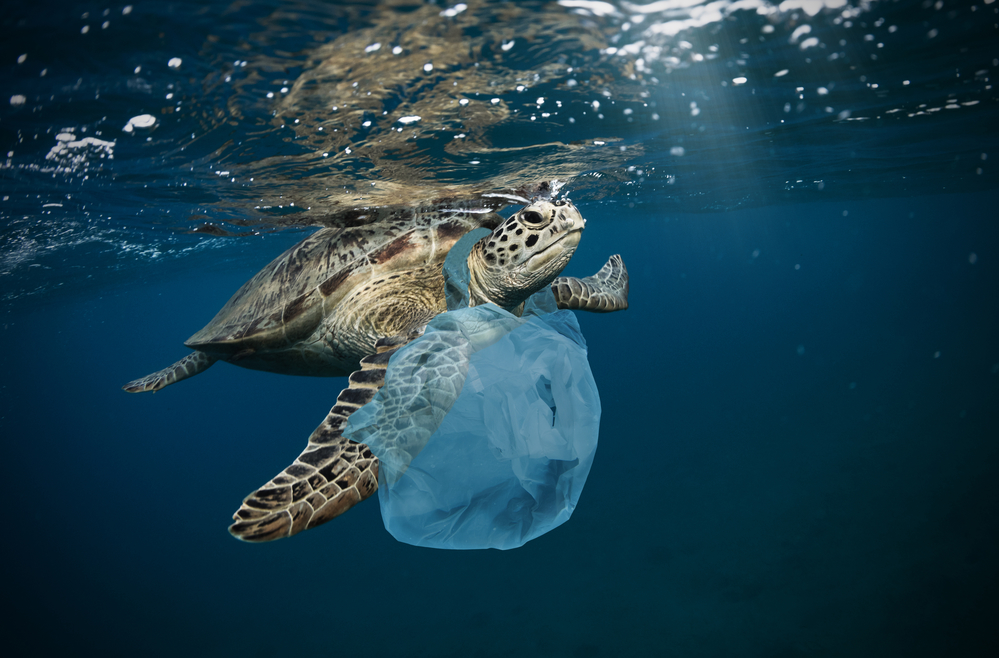 Turtle and plastic bag