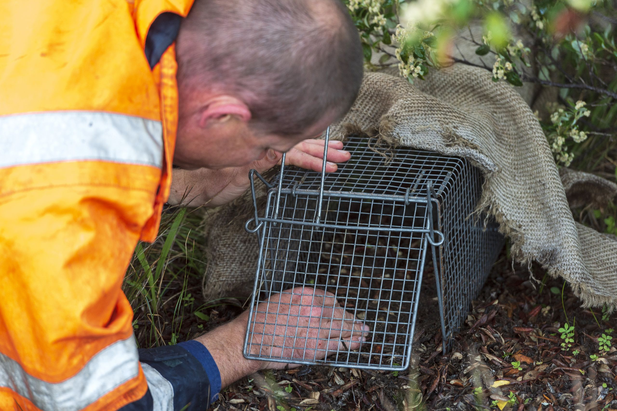 Image of fauna relocation taking place