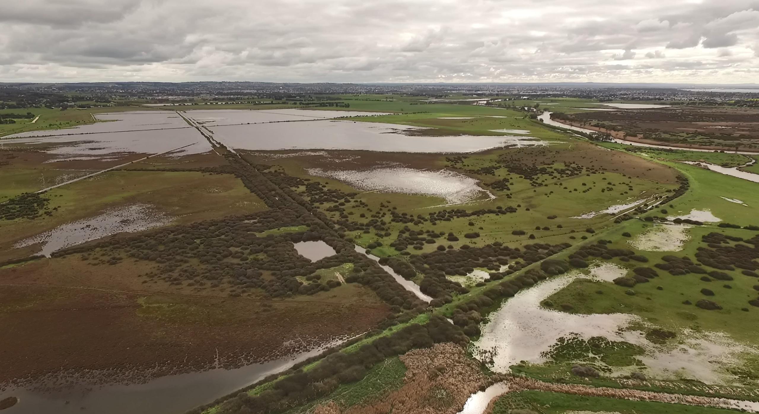 Sparrovale wetlands