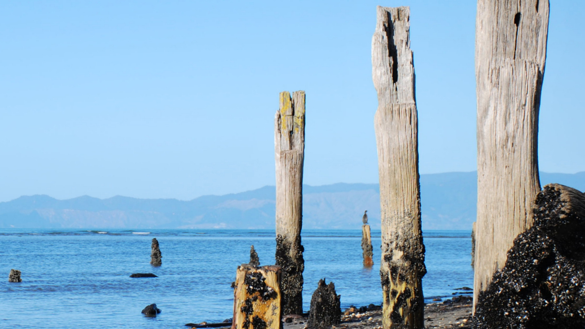 Close-up of old wharf piles on Collingwood beach