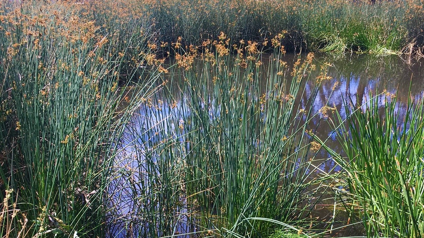 Wetland Example
