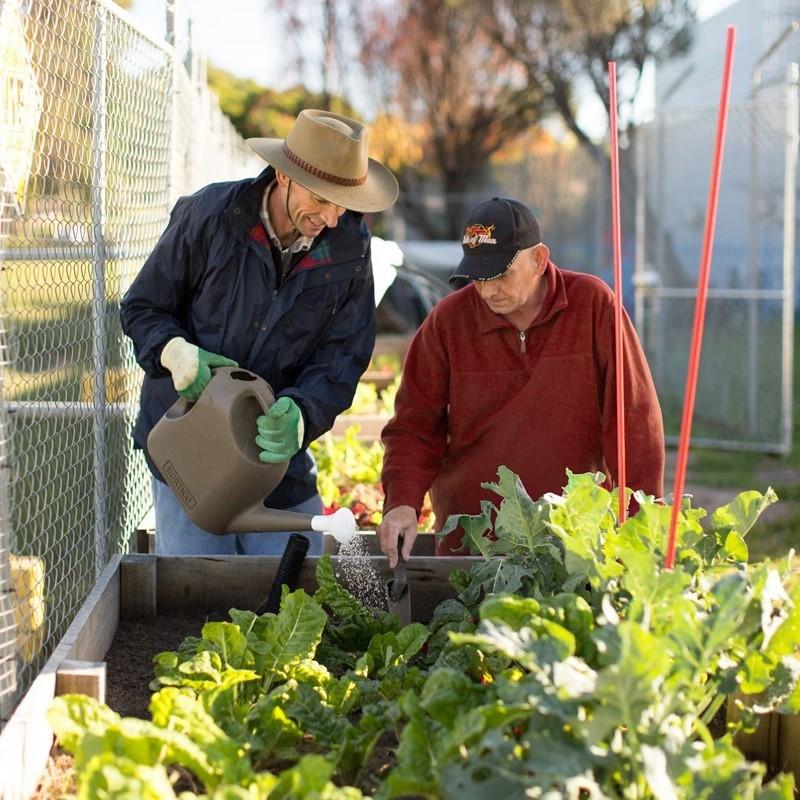 Volunteers planting vegetables and herbs