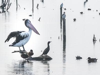 Photos of birds on waterways