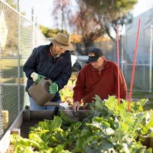 Picture of garden of home community garden