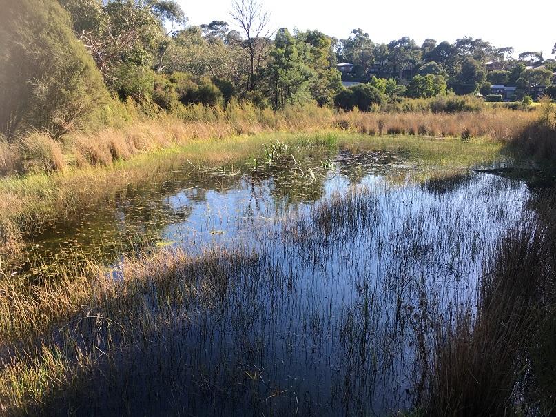 Image of Tirhutuan Wetlands
