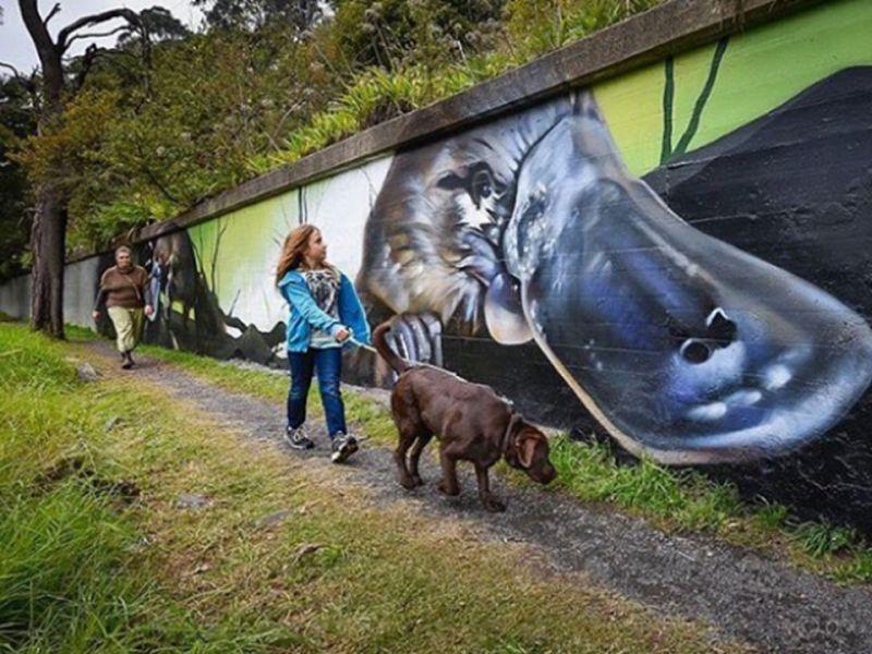 Platypus mural