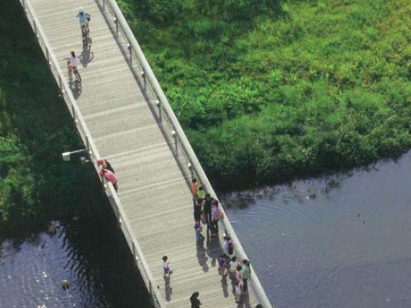Bridge over wetland