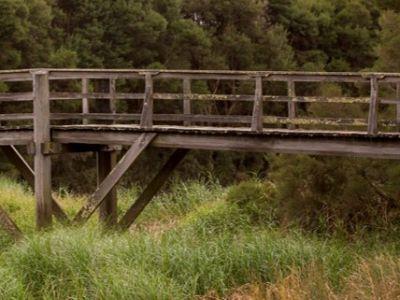 Photo of a bridge at wetlands