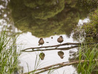 Existing wetlands