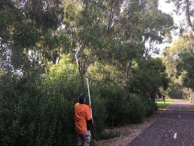 Pruning gum trees