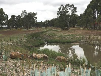 Picture of Ryans Creek Downstream After Rehabilitation