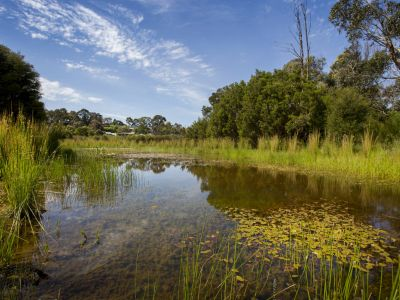 Picture of Dandenong Creek wetland