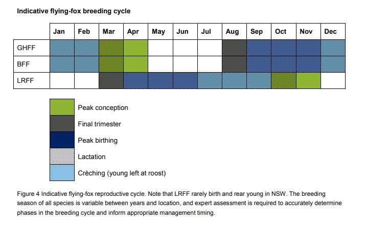 Indicative flying-fox breeding cycle