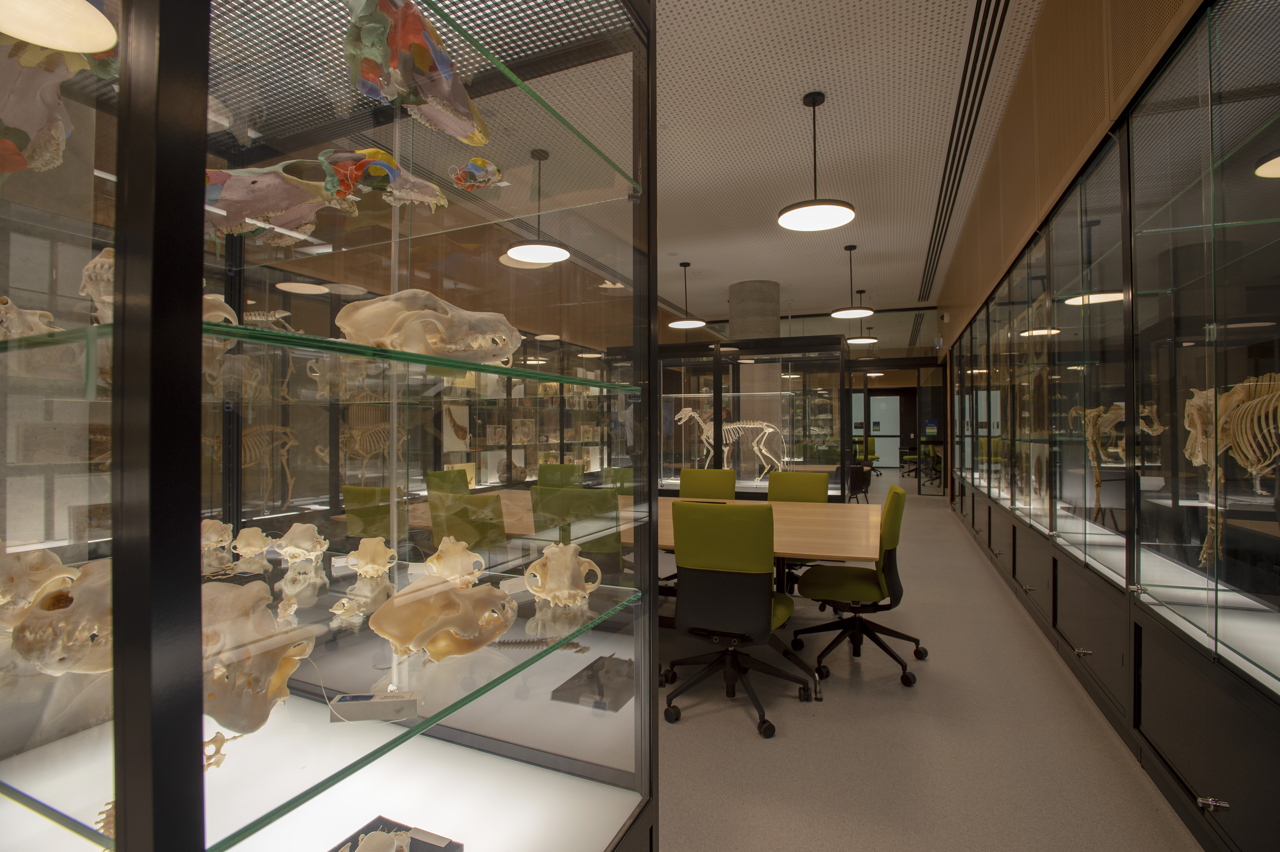 An enclosed room displays pieces of animal anatomy with a study table featured in the middle.