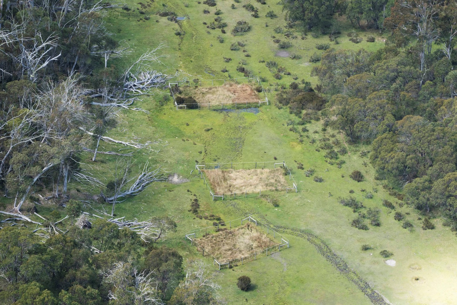 An aerial photograph of three exclusion plots at Native Cat Flat showing the contrasting vegetation.