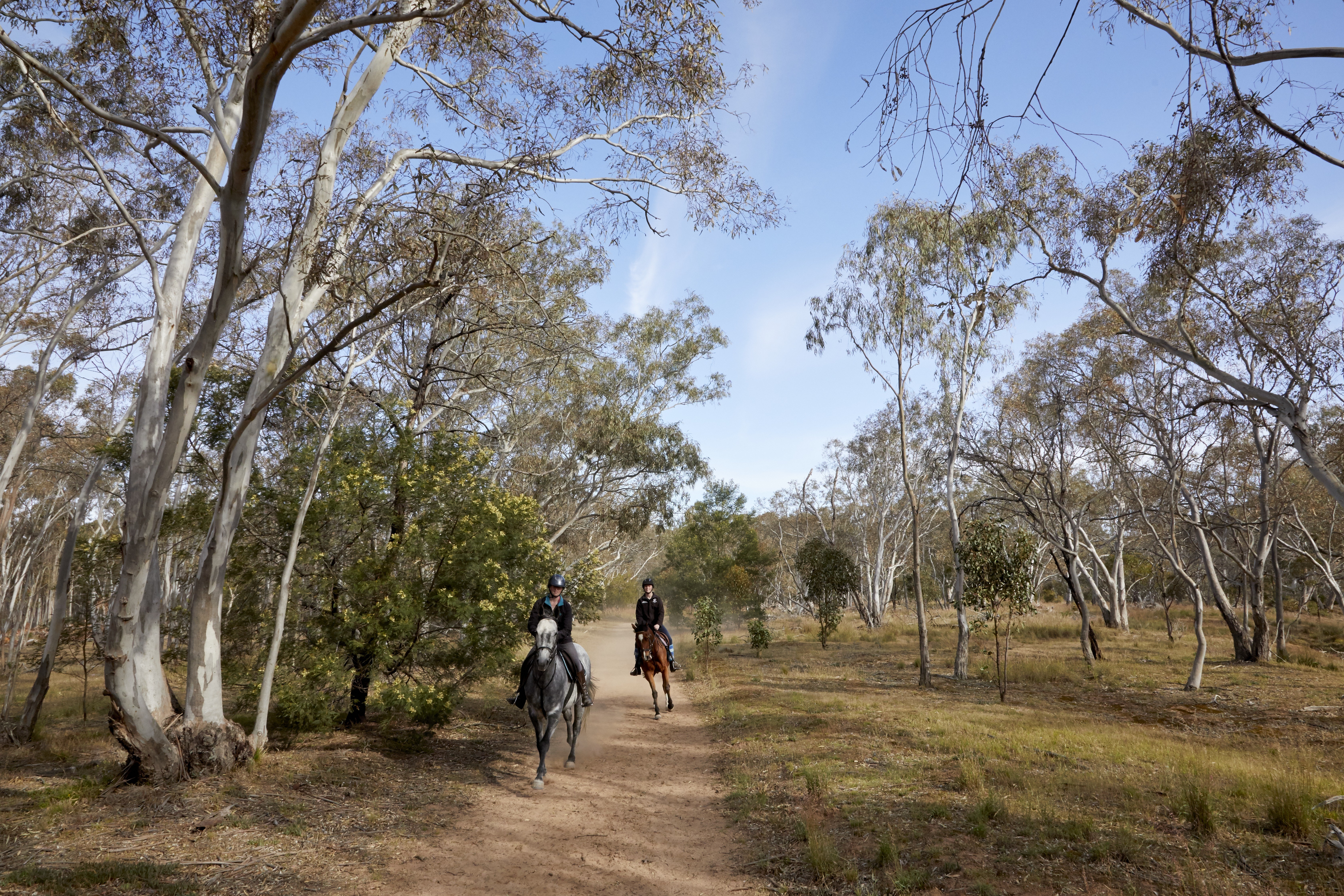 This image is of two people riding horses in one of the horse riding tracks at the You Yangs.
