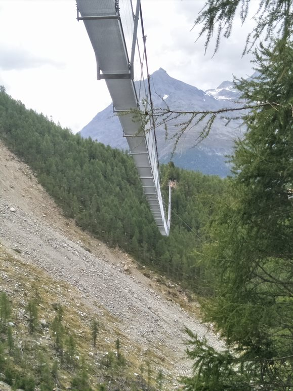 An example of a metal suspension bridge above a valley and trees as viewed from below