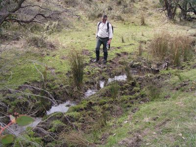 Feral Horse impacts on source of Murray River (should be clear spring)