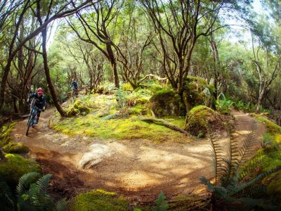 Blue Derby Mountain Bike Trails, Tasmania