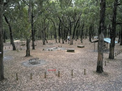 Picture of the Saw pit day visitor area showing picnic tables, firepits and picnic shelter set in among the stringybark eucalypt trees