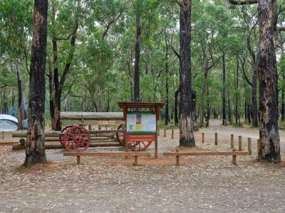 Picture of a replicate horse drawn wagon in among the stringybark eucalypt trees