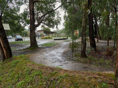 existing dirt pump track with puddle on inside of berm set in amongst the stringy bark eucalypts