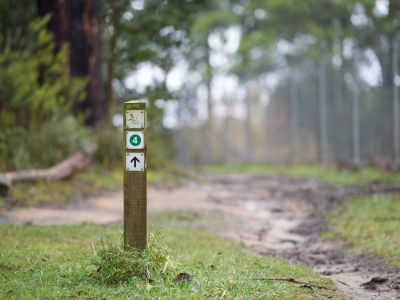 Single sign post showing track 4 with an arrow in foreground in focus and trail and forest vegetation in background slightly out of focus