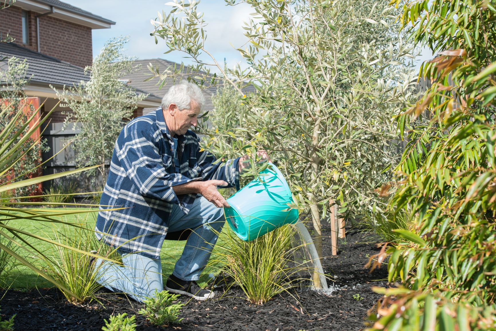Man uses bucket to water small tree