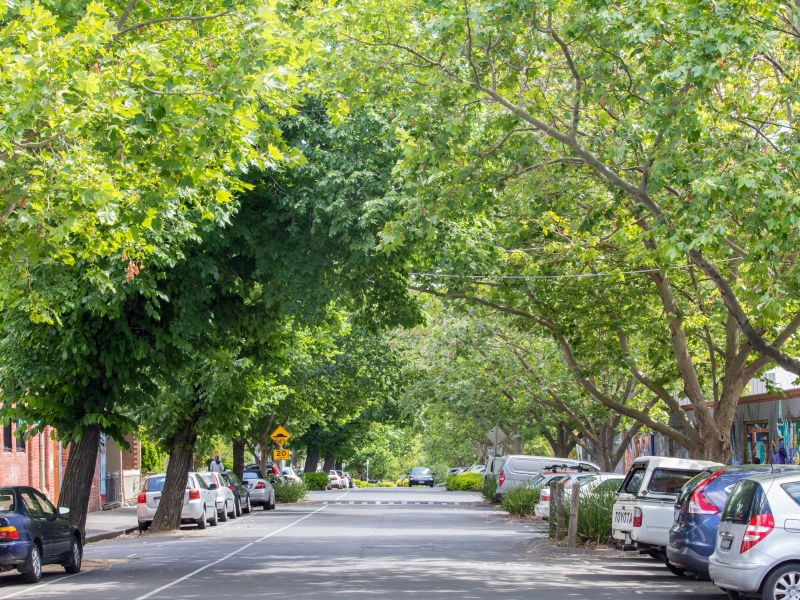 Canopy cover in our streets provide a natural way to cool our city