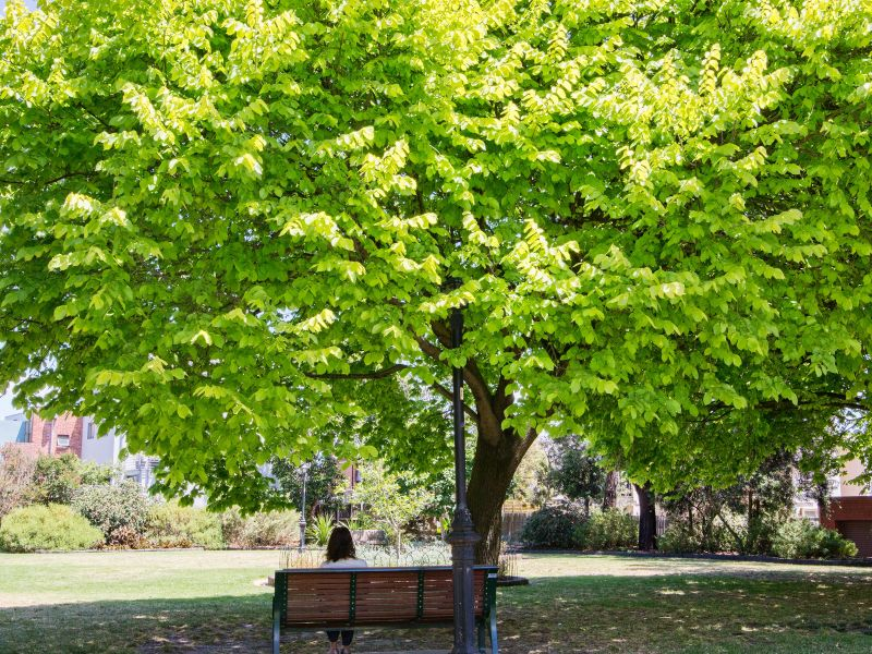 Tree canopy cover can provide shade and cooling