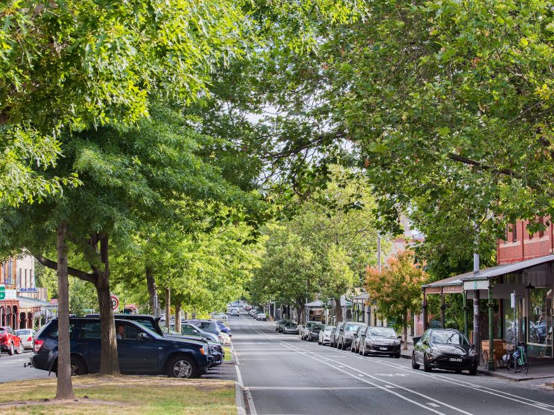 Street trees can help improve the amenity of residential and commercial strips