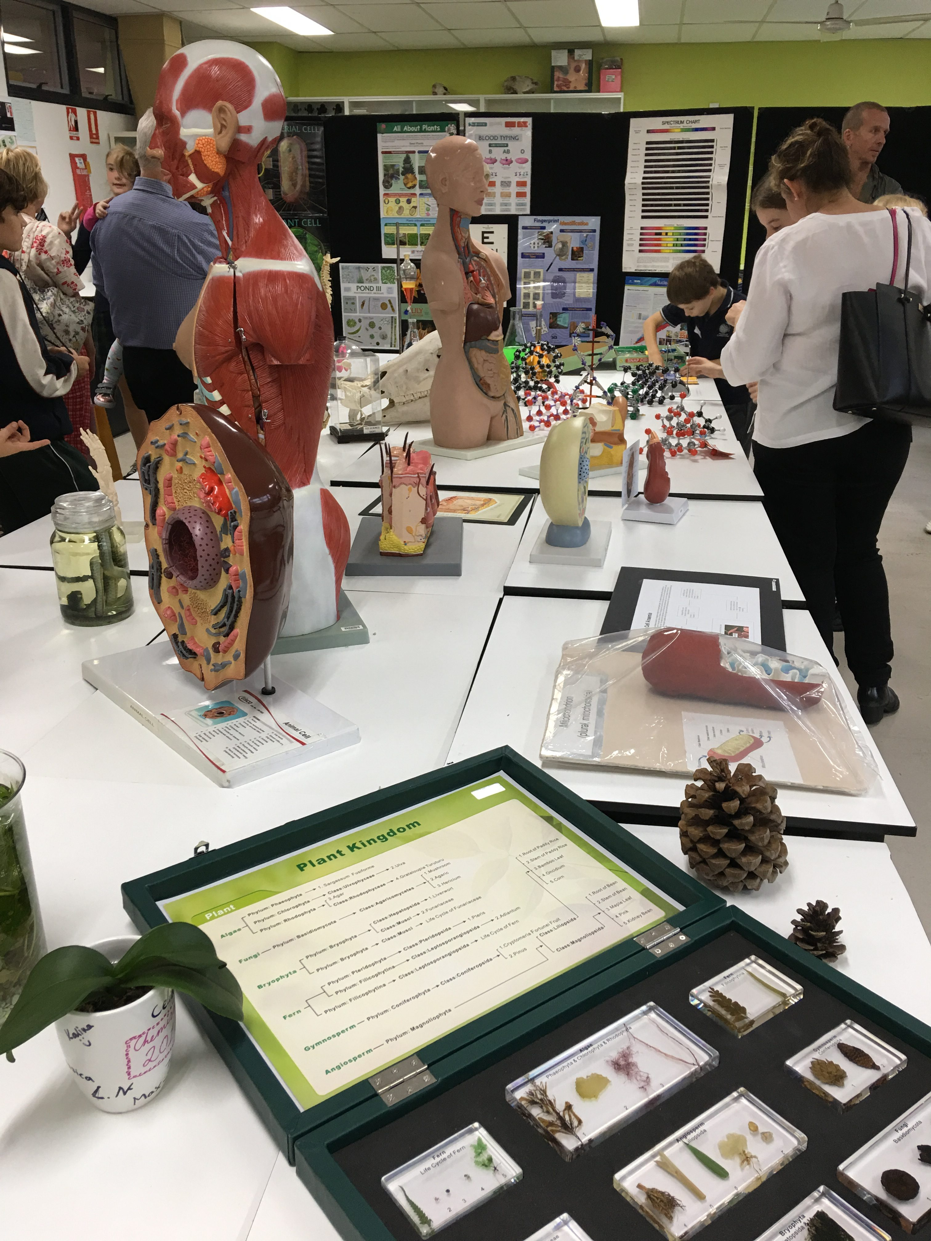 IGS STEAM and Science on show