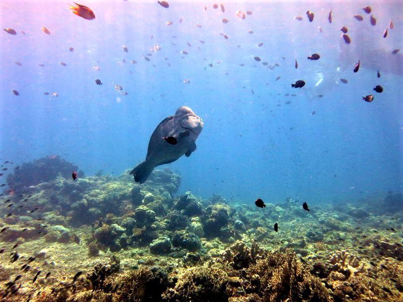 Black Marlin Dive