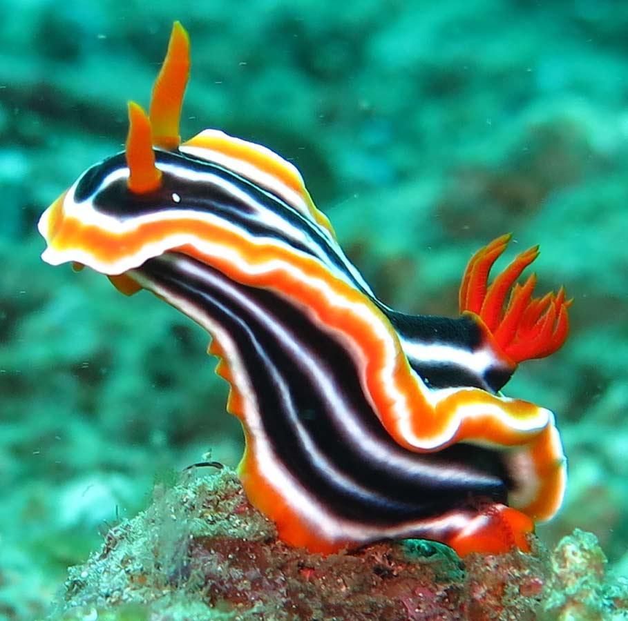 Reefseekers Diving