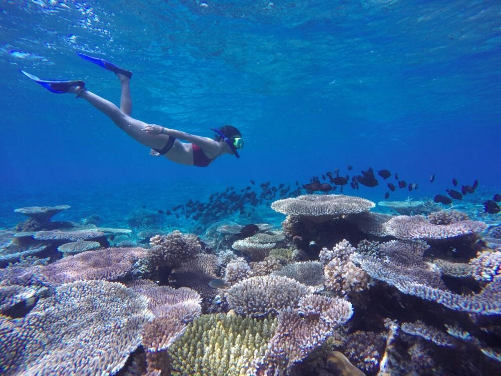 New Reef Togean Island