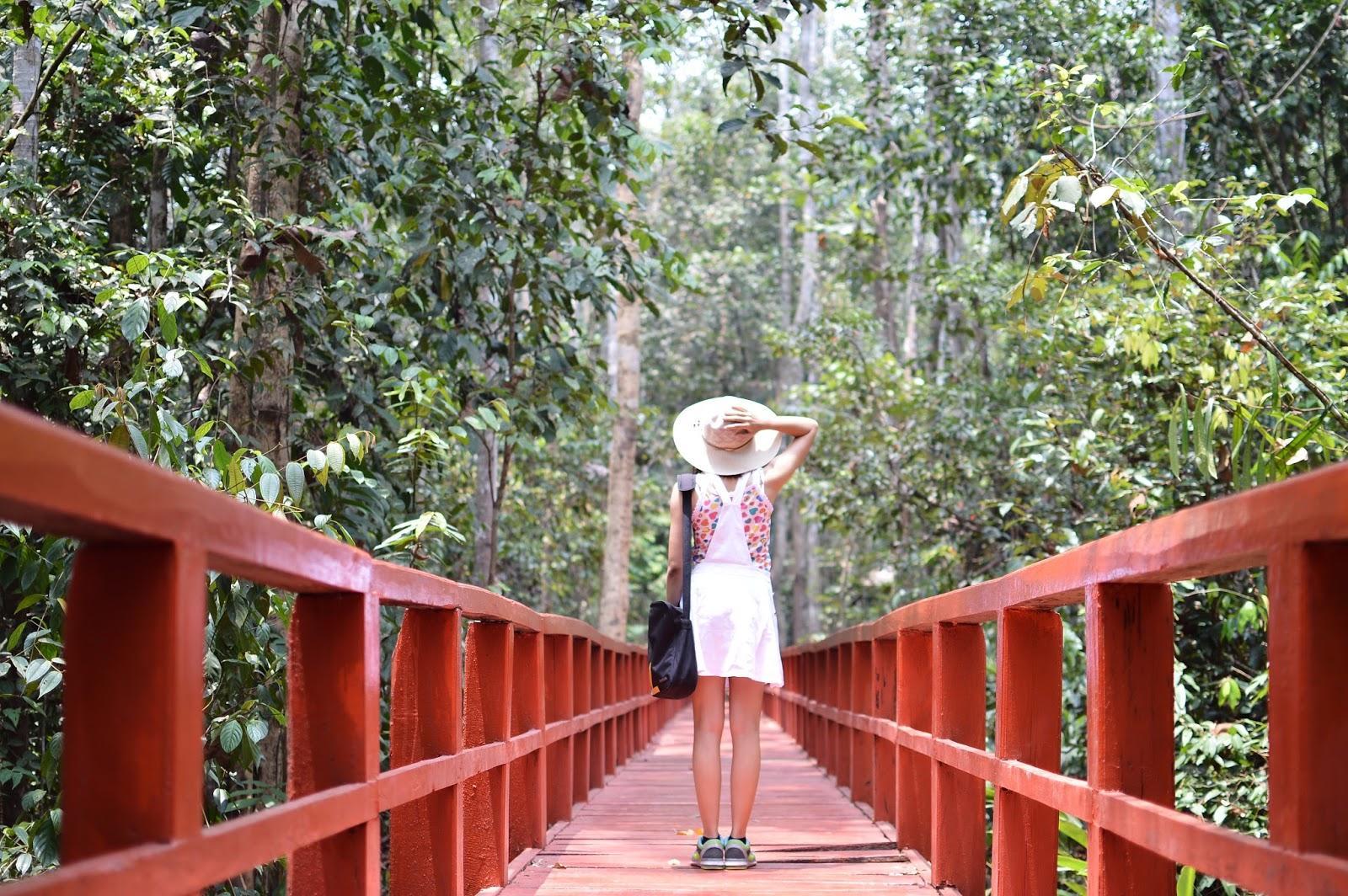 Wisata Hutan Pelawan