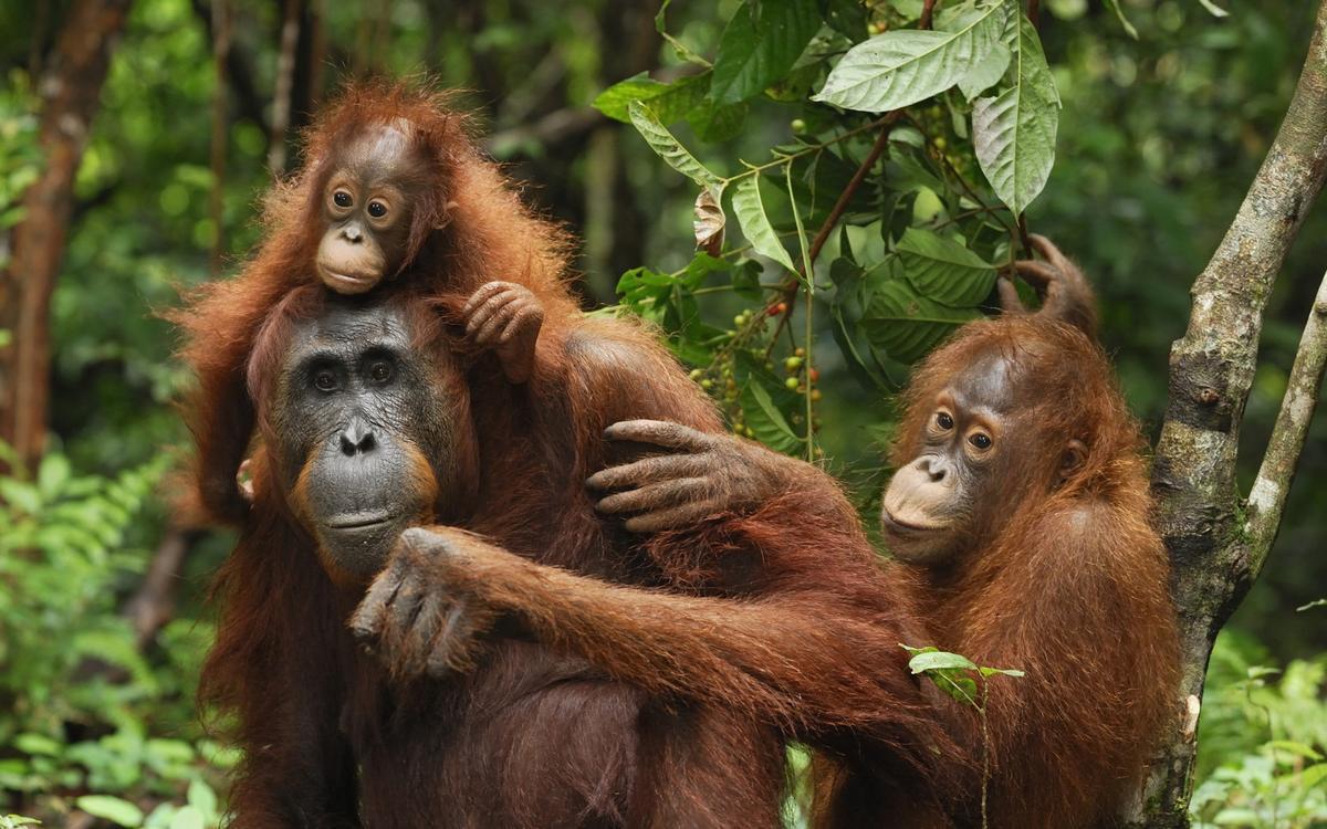 Lawang Hill - Jungle Trekking