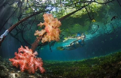 South Mangrove Raja Ampat
