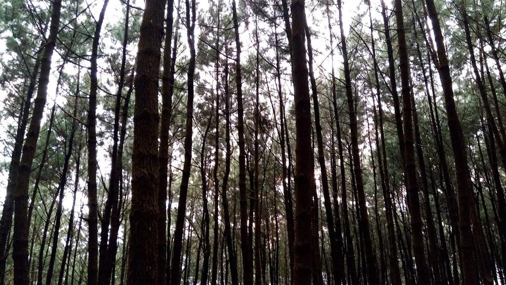 Halimun Salak National Park